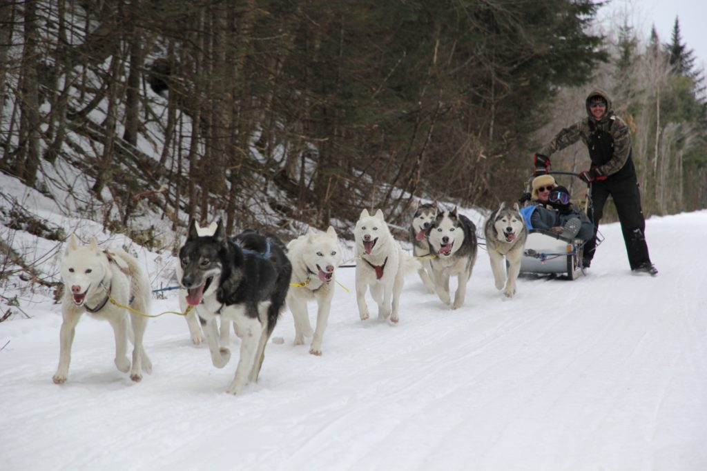 Dog sledding near Littleton NH