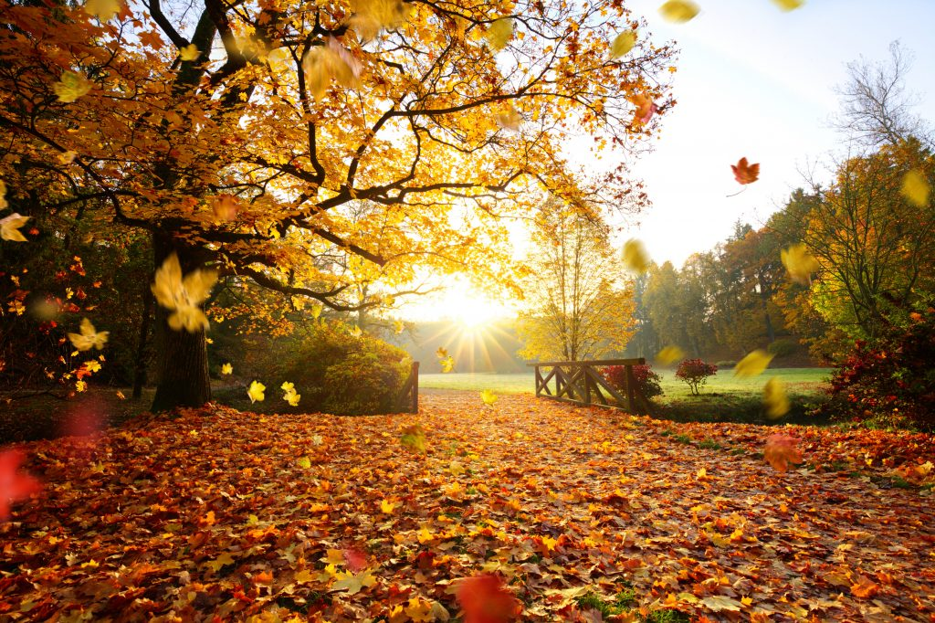 Enjoy the fall foliage in New England with a stay at the historic Thayers Inn in Littleton, NH.